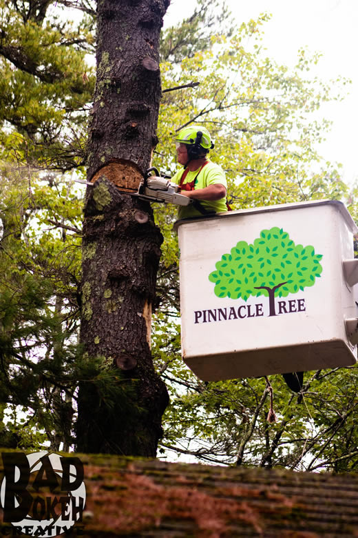 One of Pinnacle Tree's professional tree arborists cutting down a tree from a bucket loader.