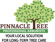 Logo for Pinnacle Tree Professional Arborists.